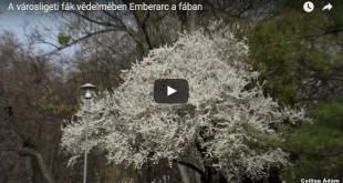 a városligeti fák védelmében